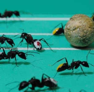 Ant world cup
