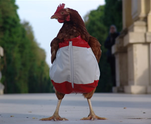 Chickens Suit