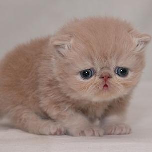 cute_cat03.jpg