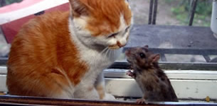 Tom & Jerry